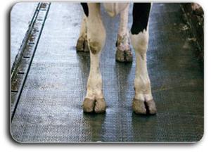 cow feet found in takeaway